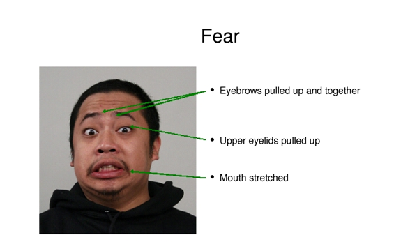 Universal Facial Expression- Fear
