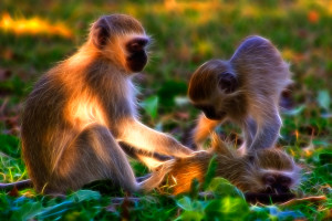 stockvault-vervet-monkeys-abstract133573