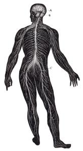 stockvault-human-nervous-system-circa-1911148445