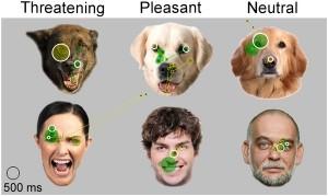dog-facial-expressions